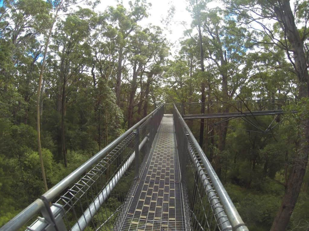 Denmark Tree Top Walk