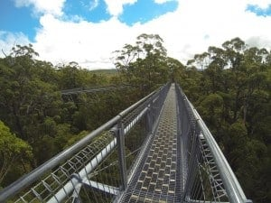 Denmark's Tree Top Walk