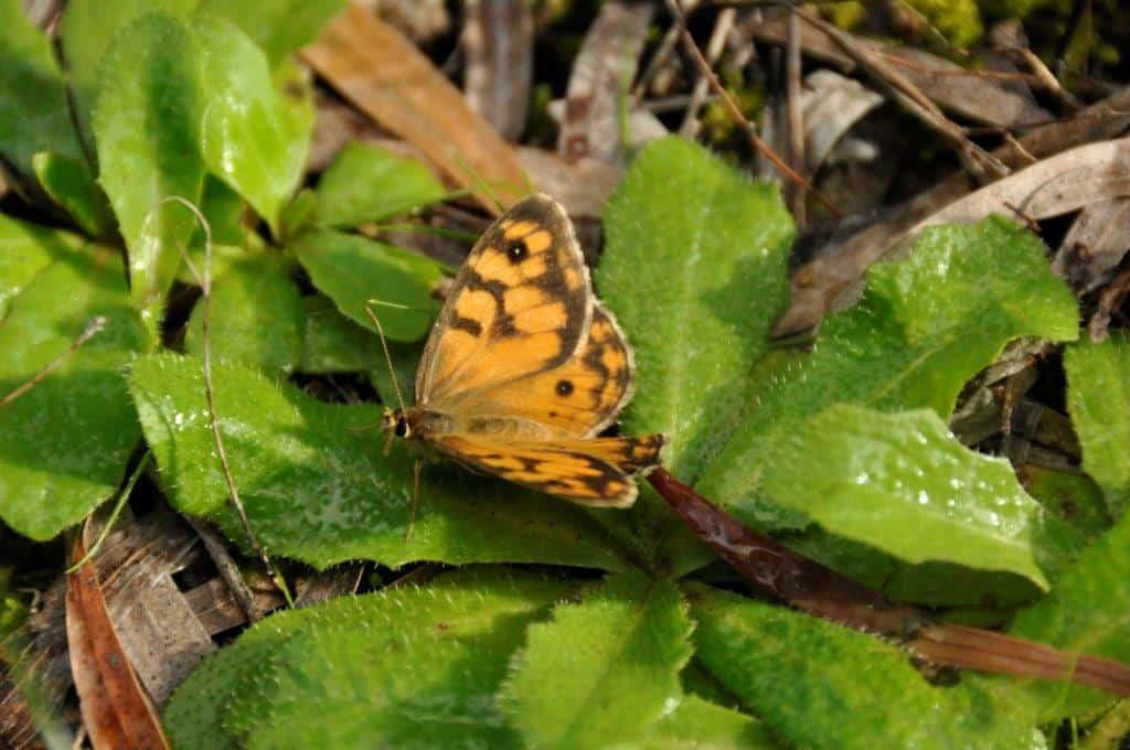 A friendly butterfly