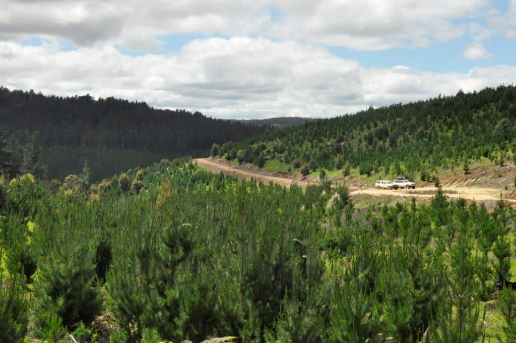 Logging tracks near Nannup