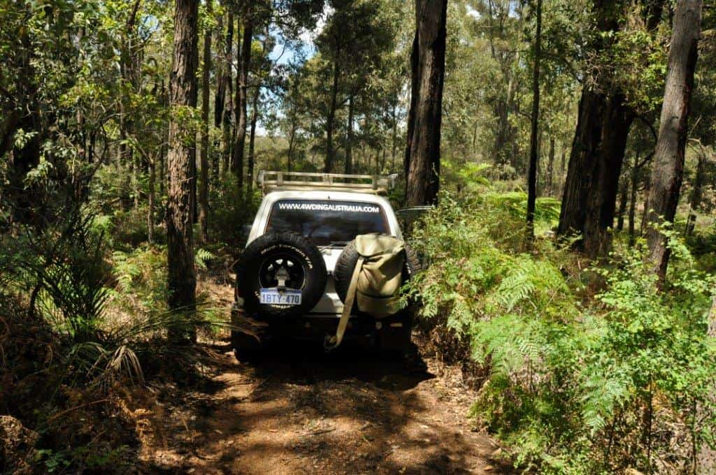 Our 80 in the bush