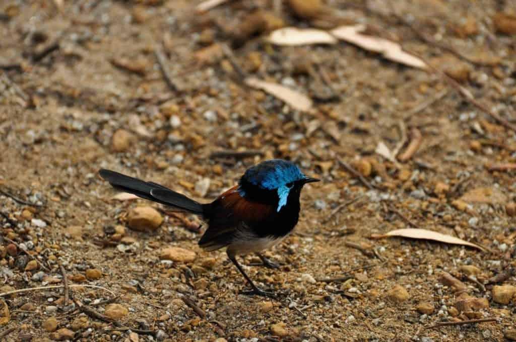 Albany bird life