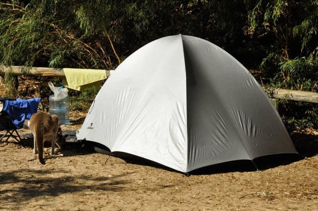 Camp with the kangaroos