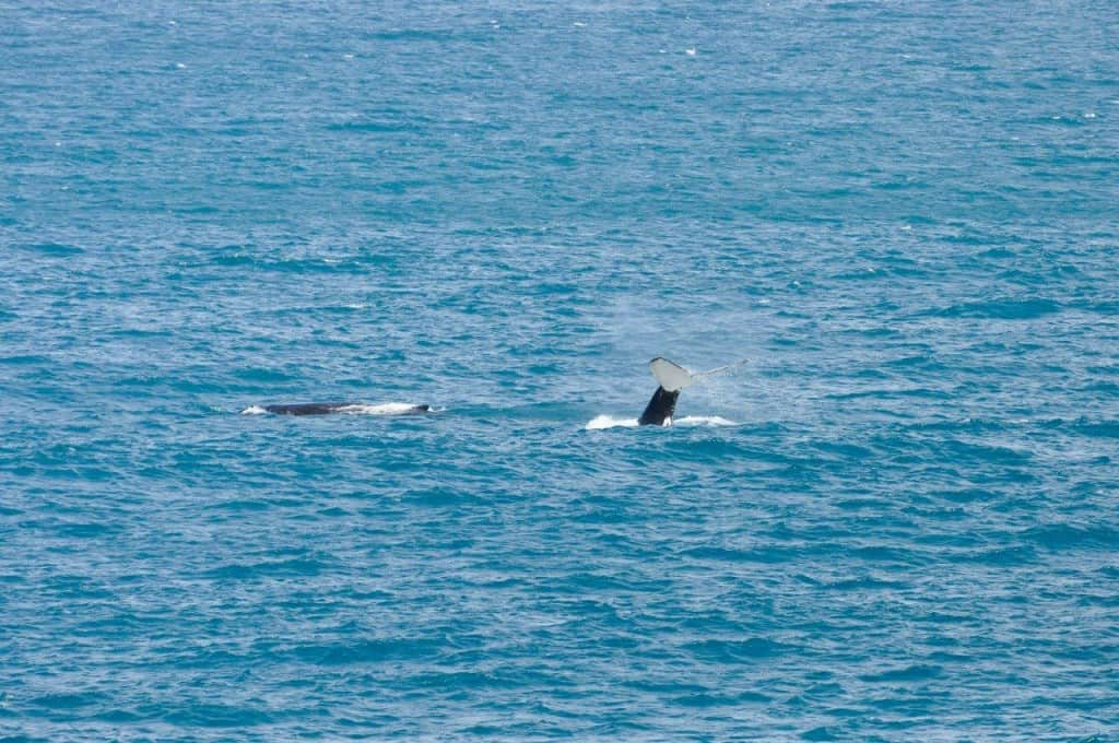 Whales at Gnaraloo