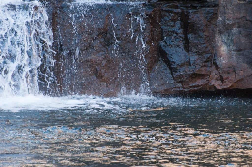 Bell Gorge python swimming
