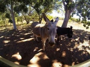 Animal life at El Questro
