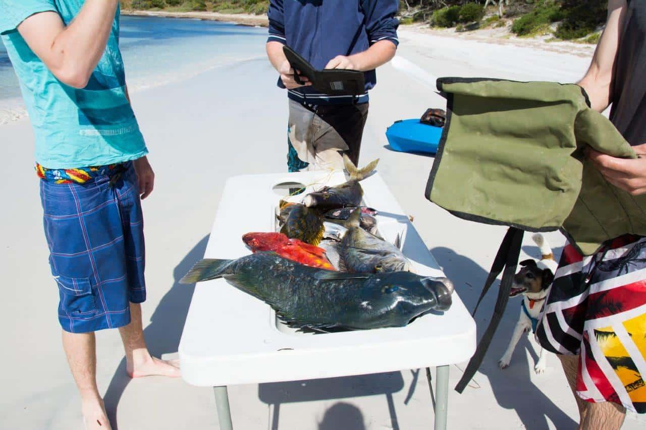 Spearfishing at Bremer bay