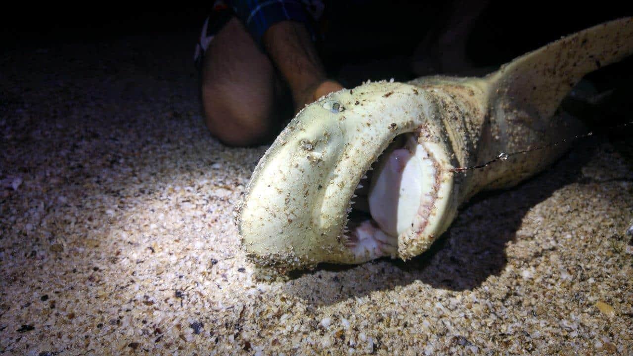 Shark off the beach at Carrarang