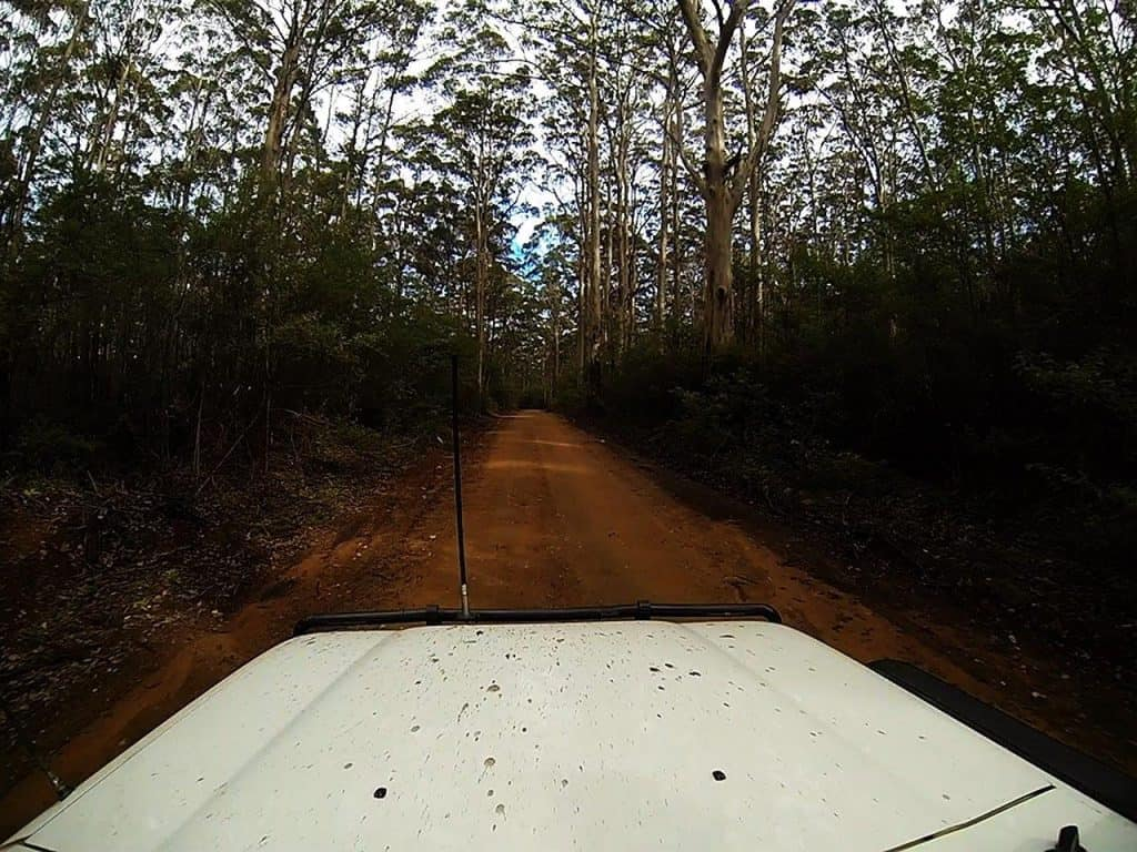 Boranup Forest Drive