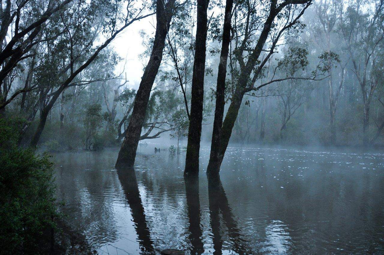 murray-river-fog-at-dwellingup