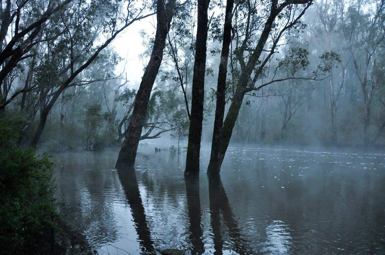 murray-river-fog-at-dwellingup