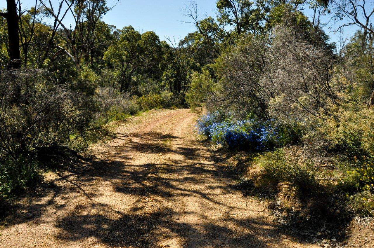wildflowers-at-perth-national-park