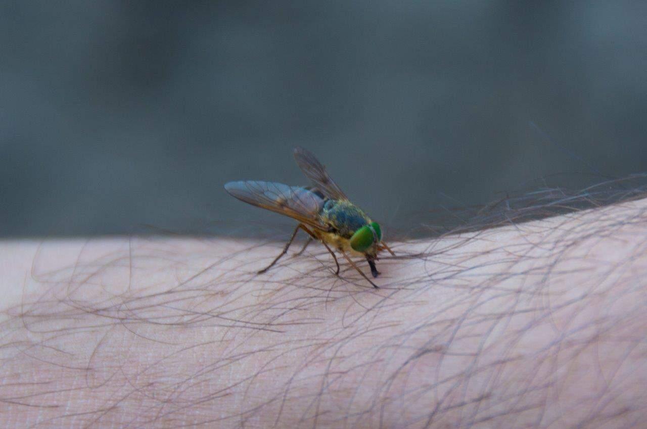 March Flies in WA