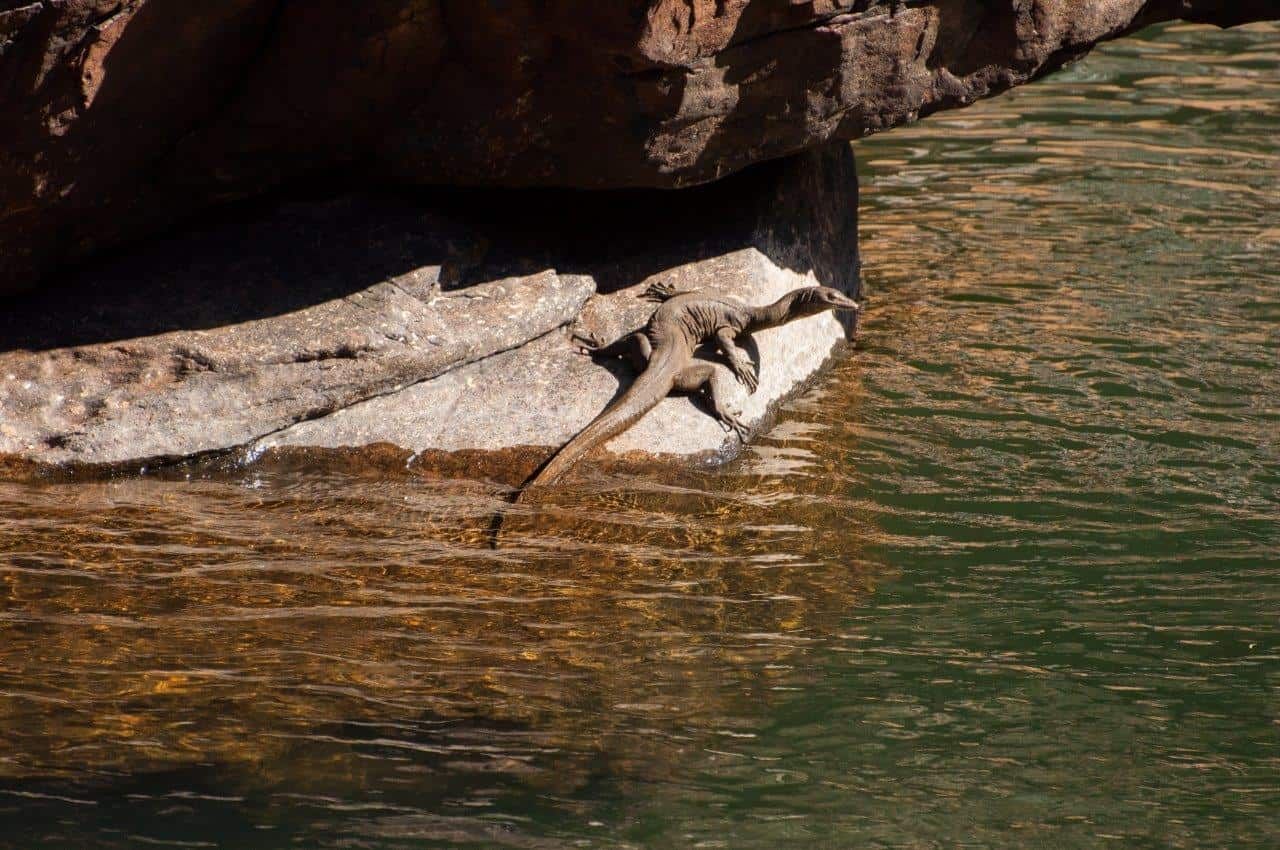 Animals at Bell Gorge