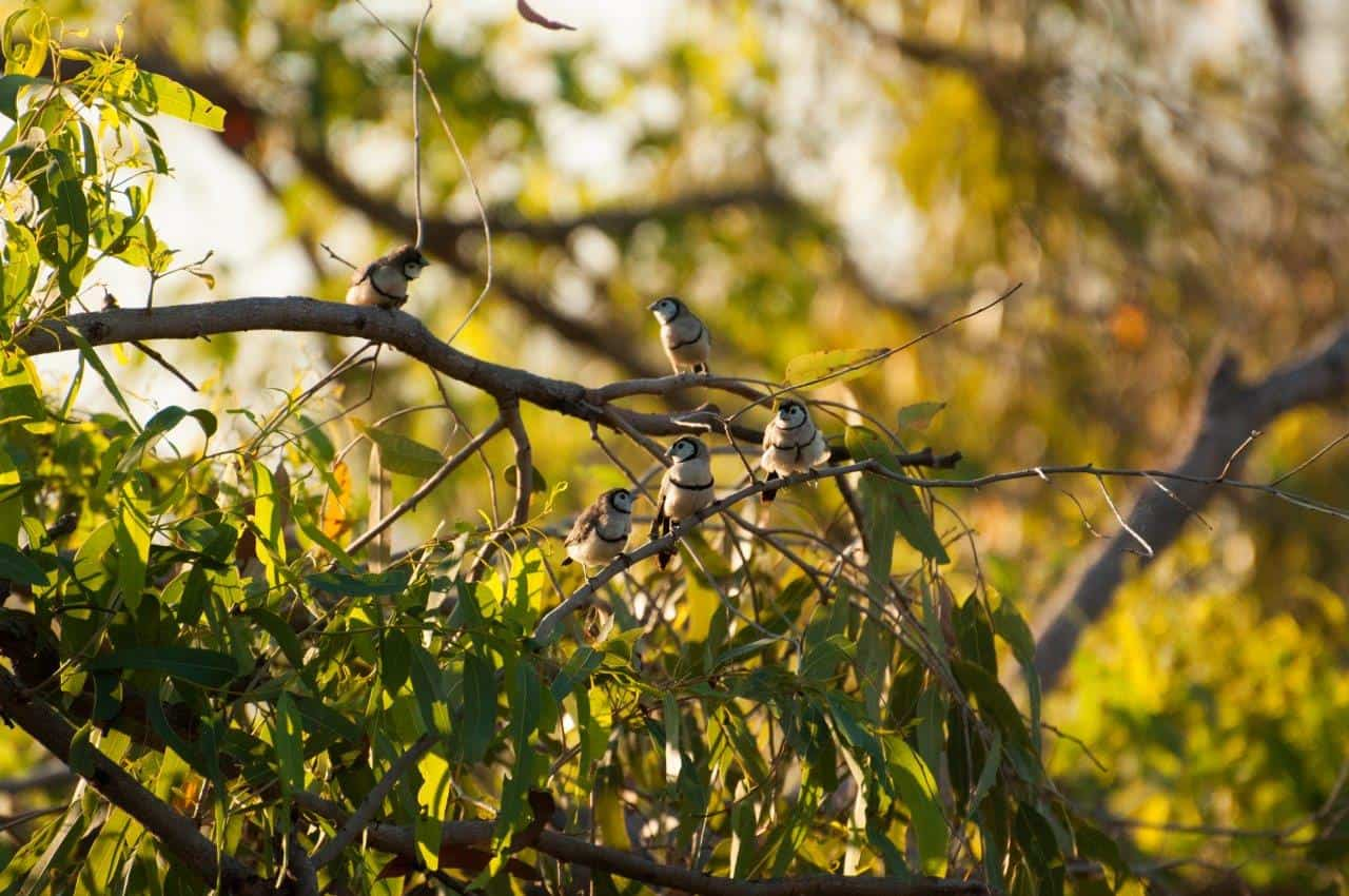 Finches at Silent Grove