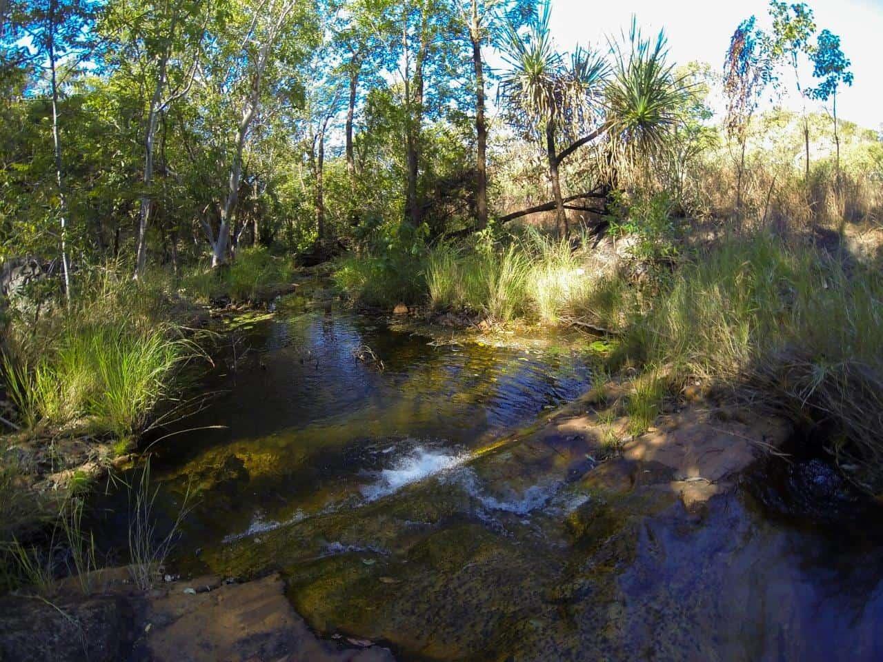 Silent Grove Creek