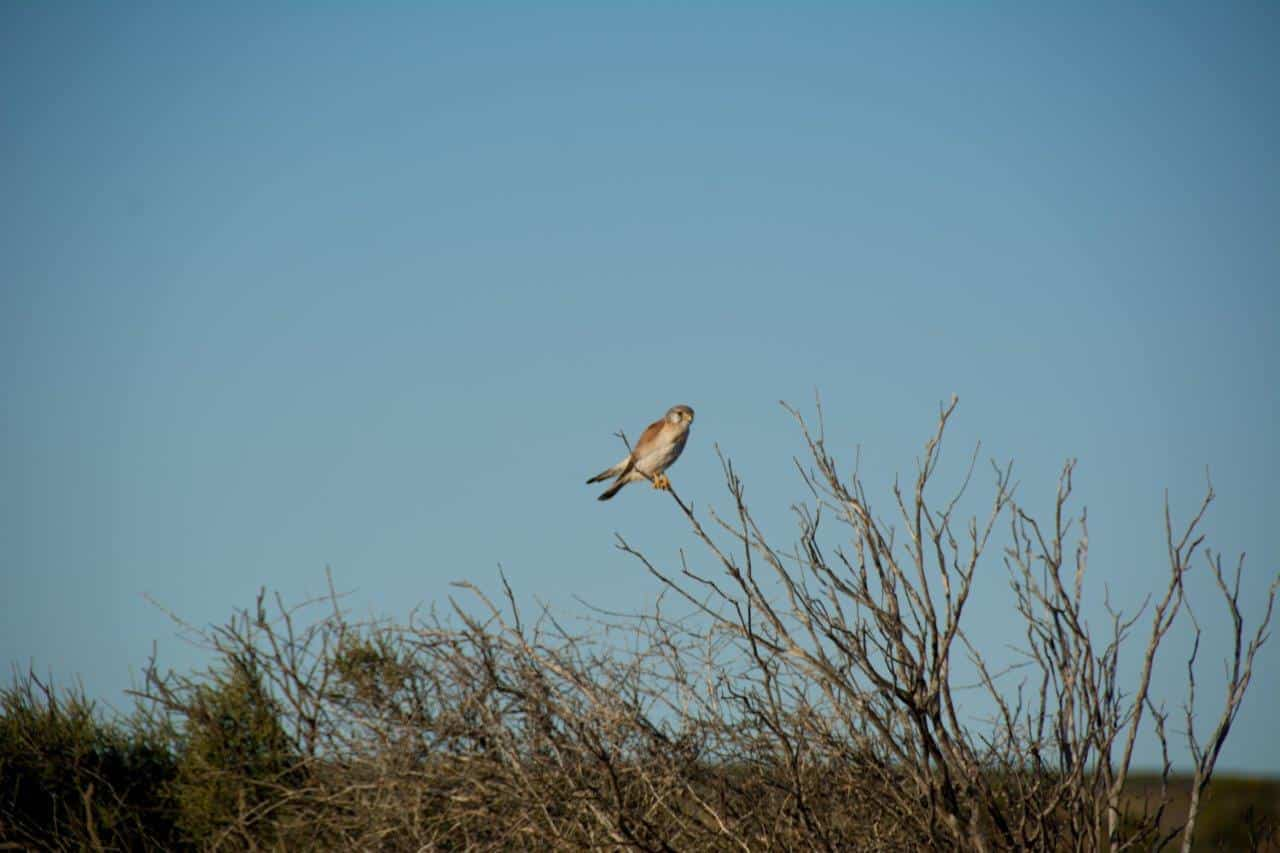 Denham birds