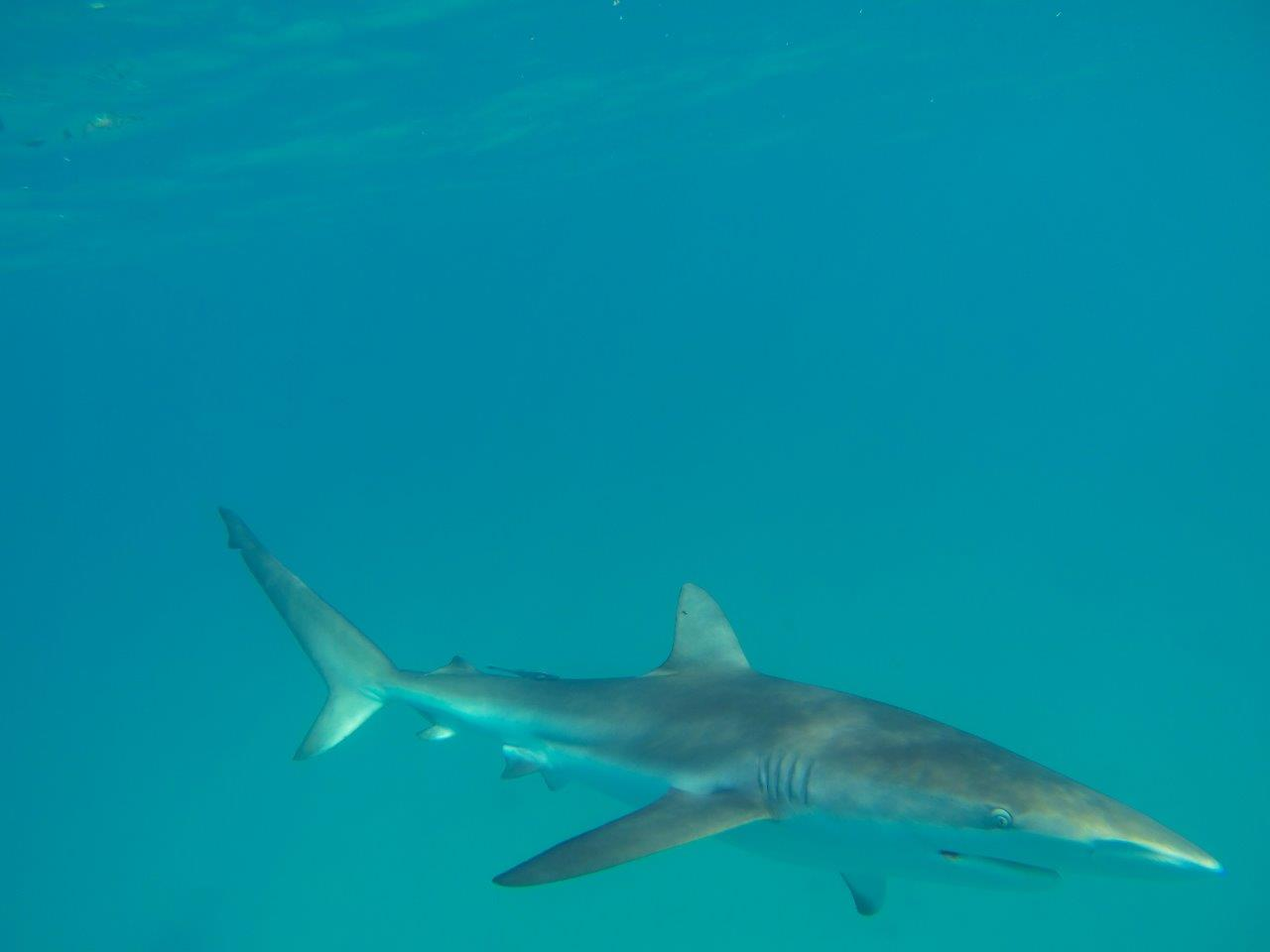 Shelter Bay at Steep Point Sharks