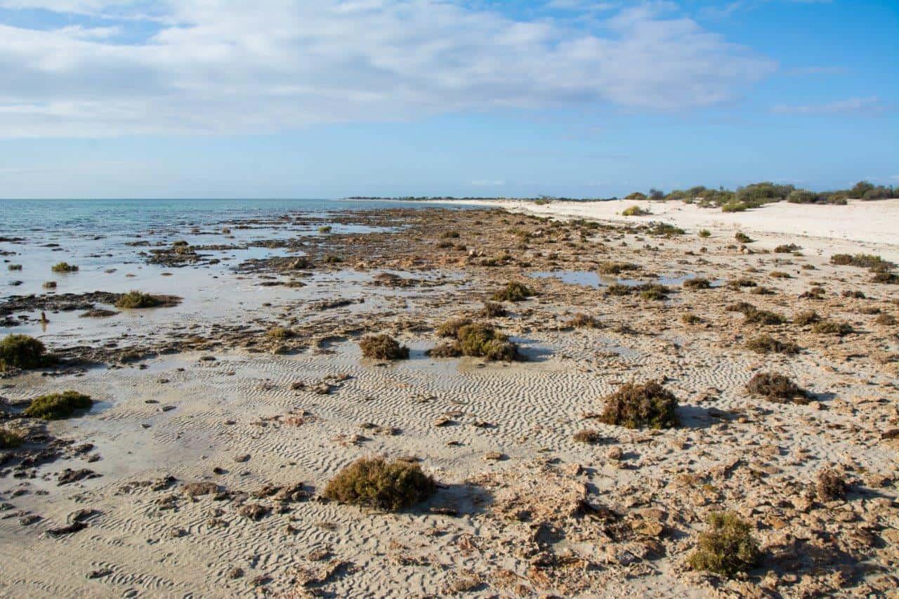 Stromatolite beach