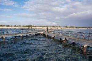 Weather at Shark Bay