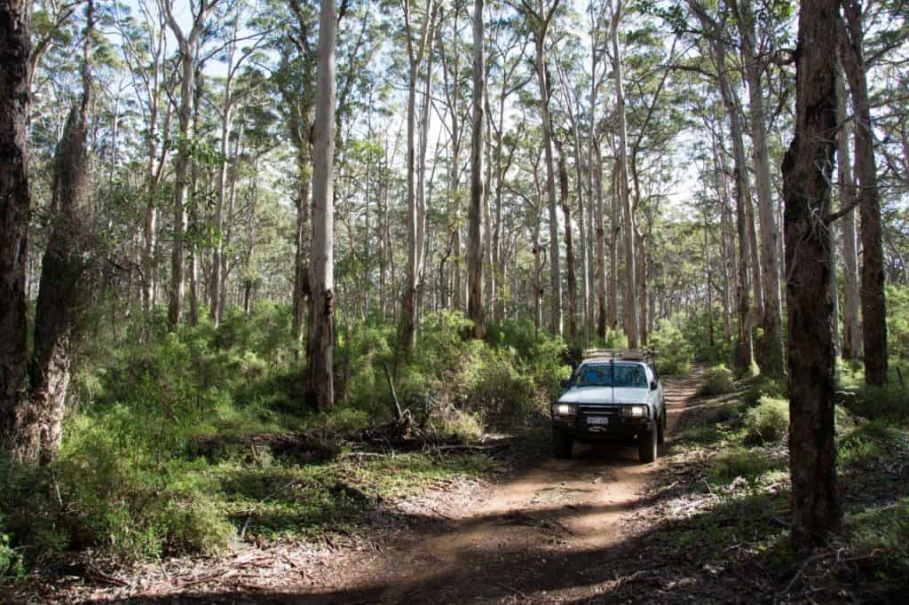 Karri forests in Margaret River