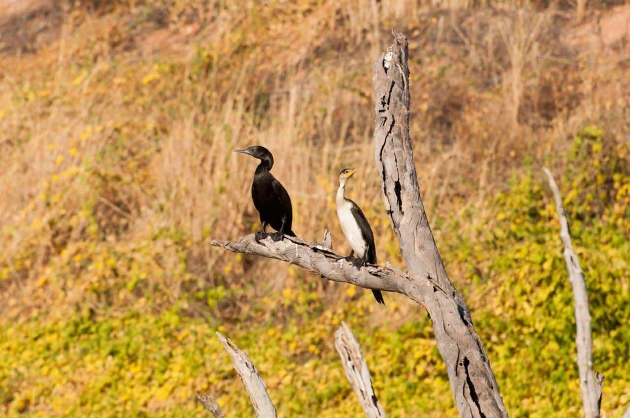 Wildlife at Lake Argyle