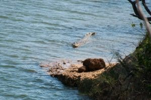 Fishing with big crocs around