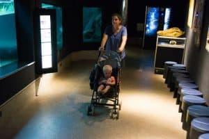 Aquarium in the NT