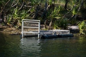Crocodiles at Kakadu