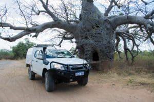 Kununurra Boab Tree
