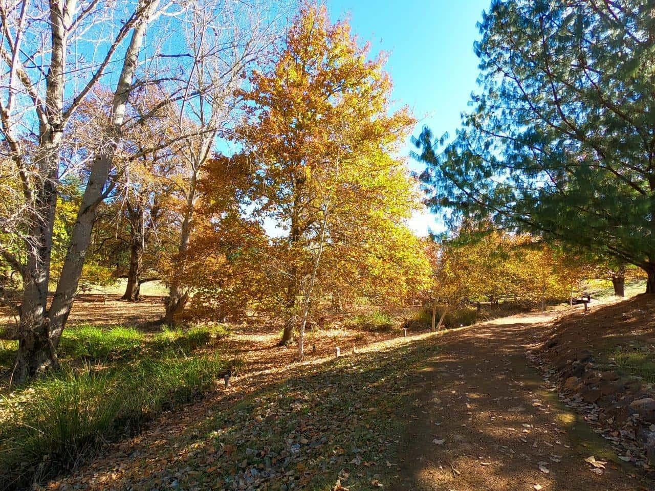 Golden Valley Tree Farm