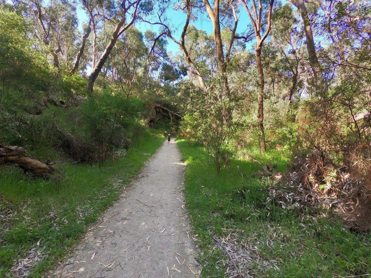 Walking through Yanchep NP