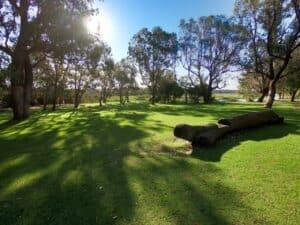 Yanchep Lake grass