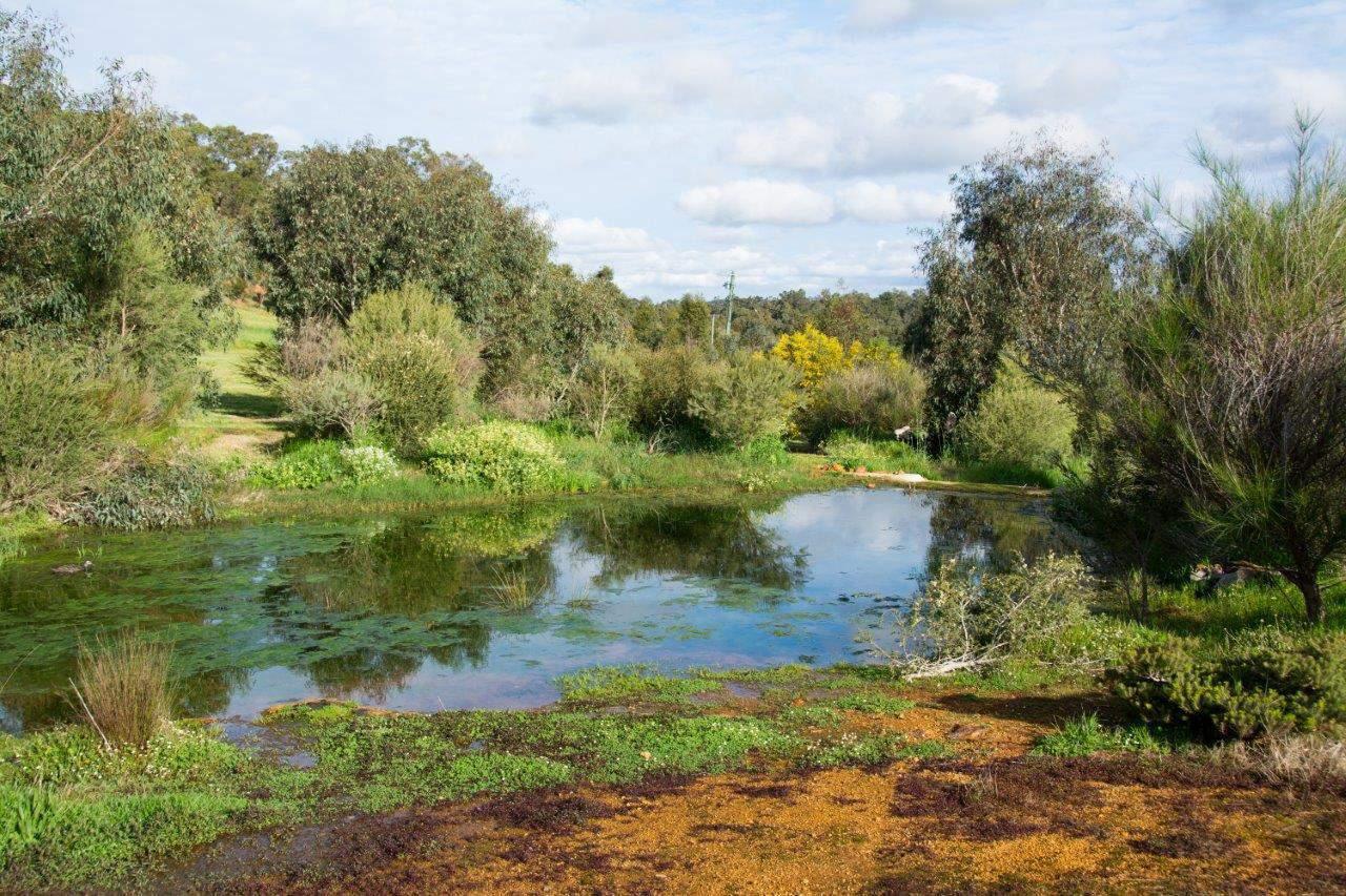 Robinvale Pond
