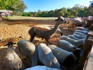 Animal feeding at Willowbrook