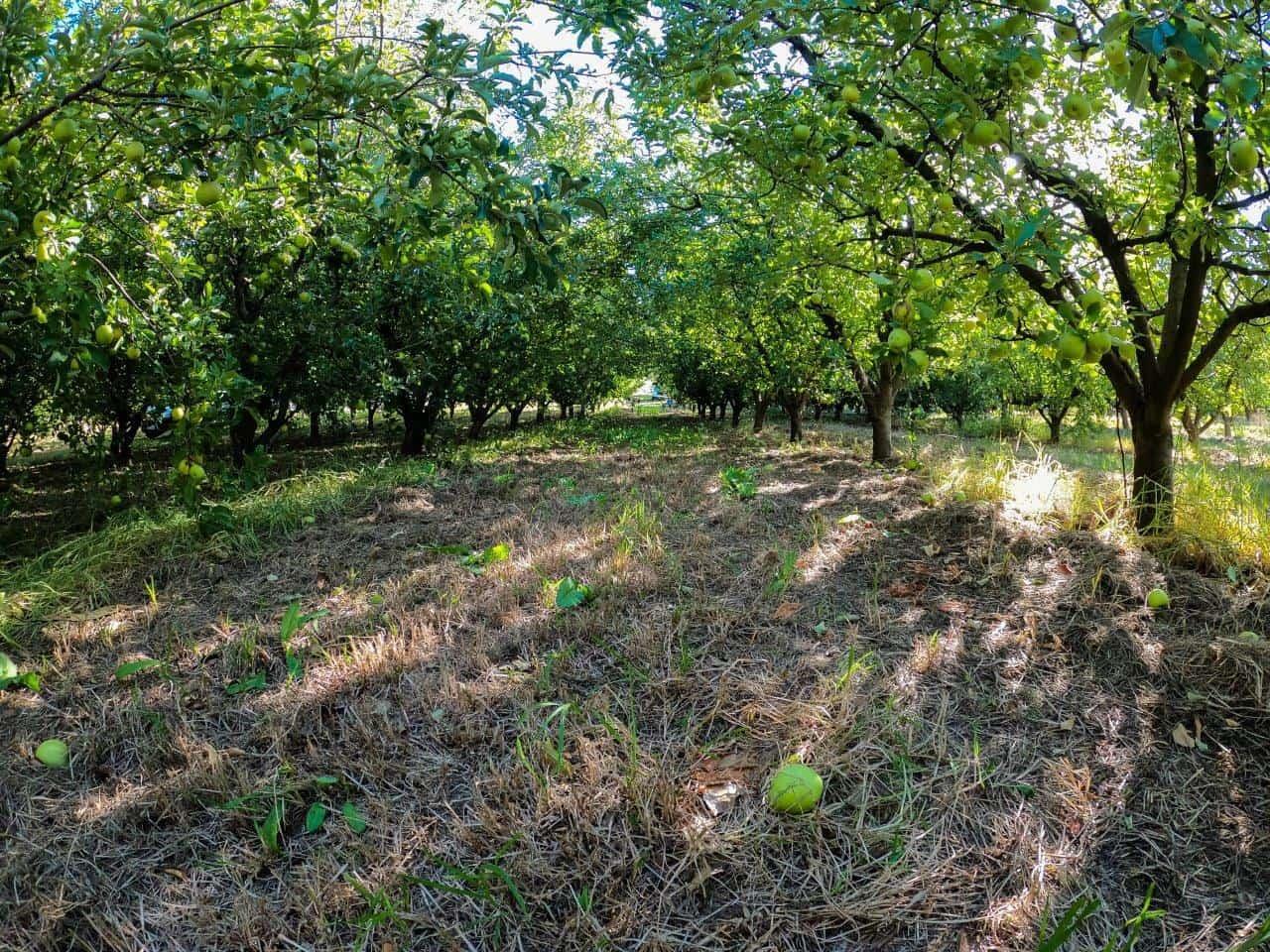Carmel Cider Orchard