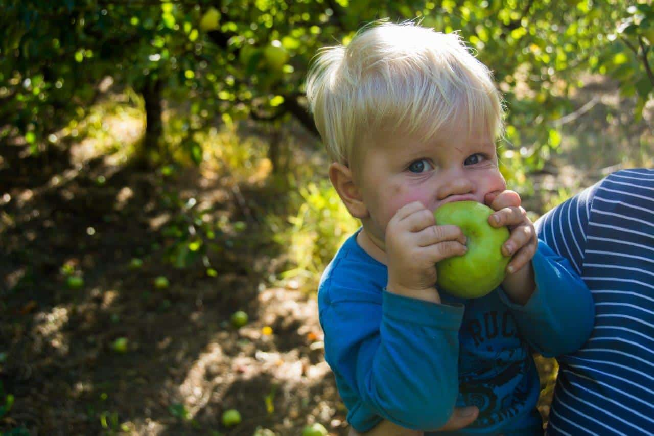 Cooper eating an apple