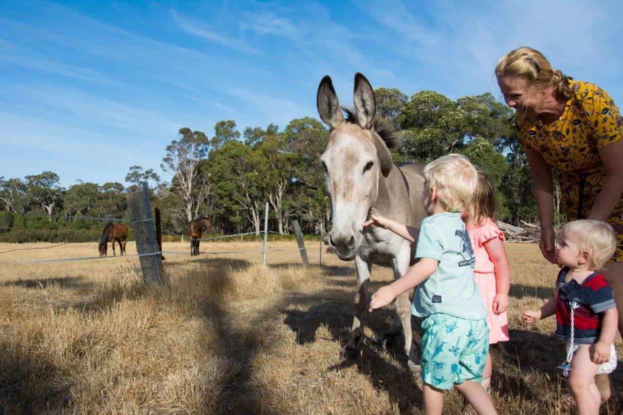 The donkey at Glenbrook