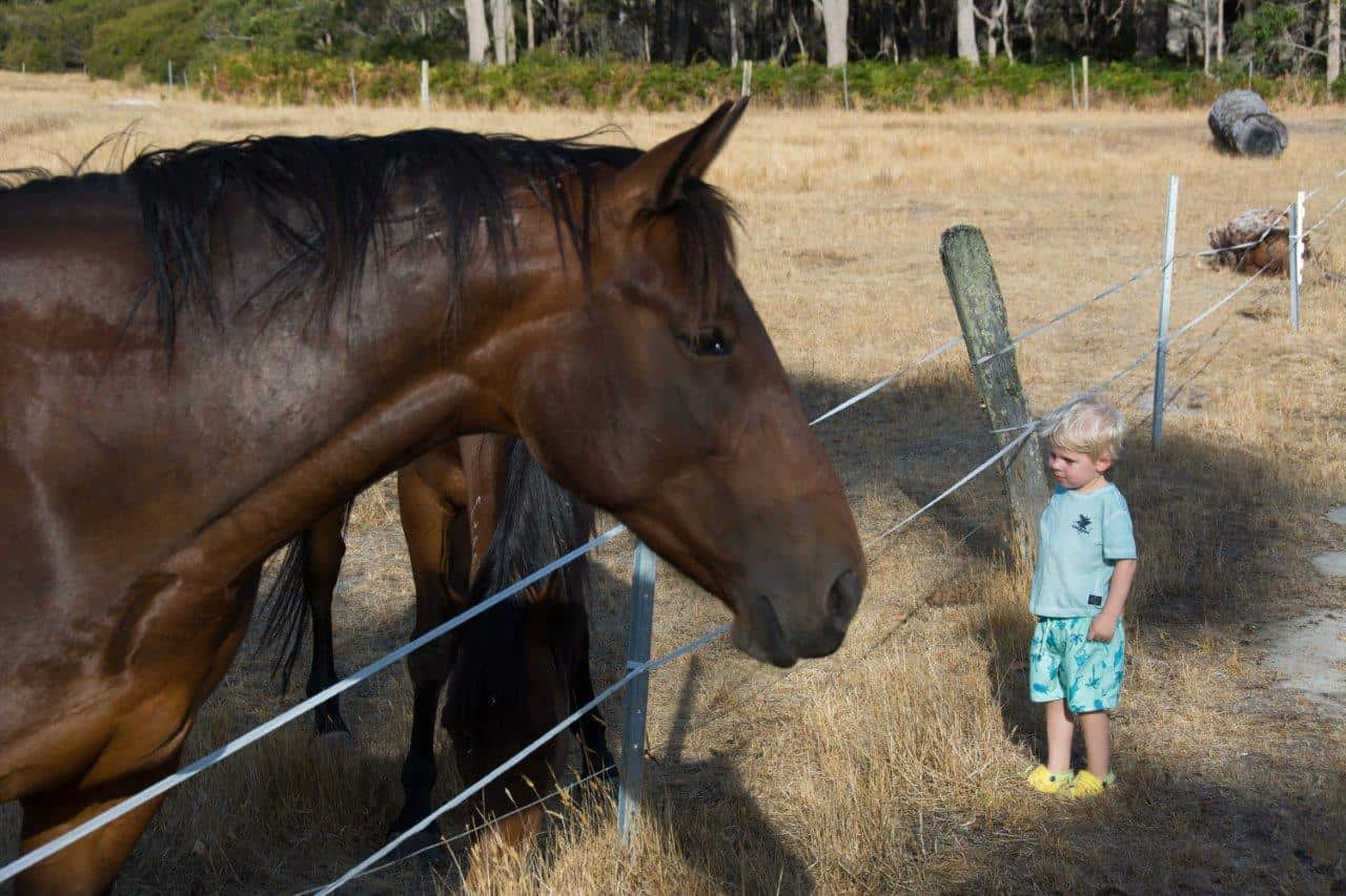 Friendly horses at Glenbrook