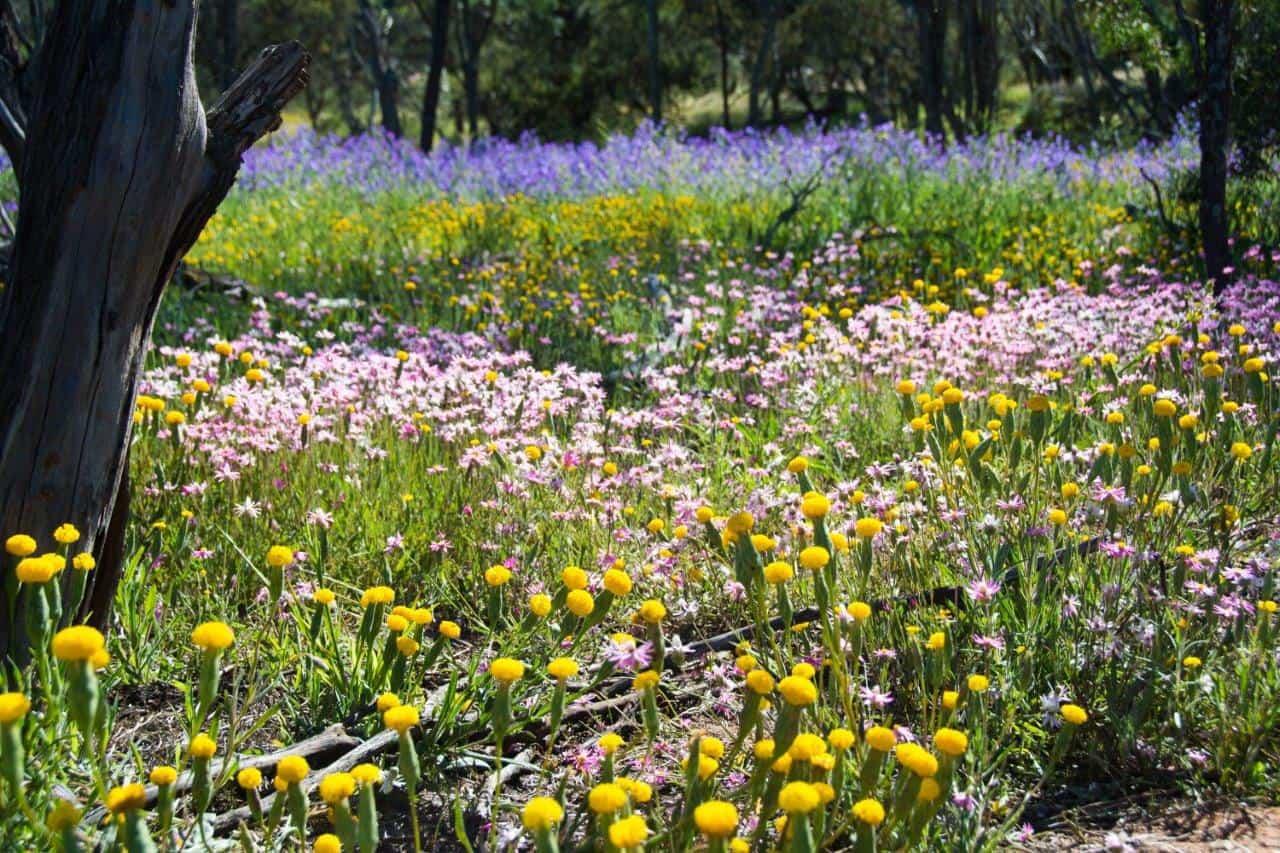 Depot Hill Flowers