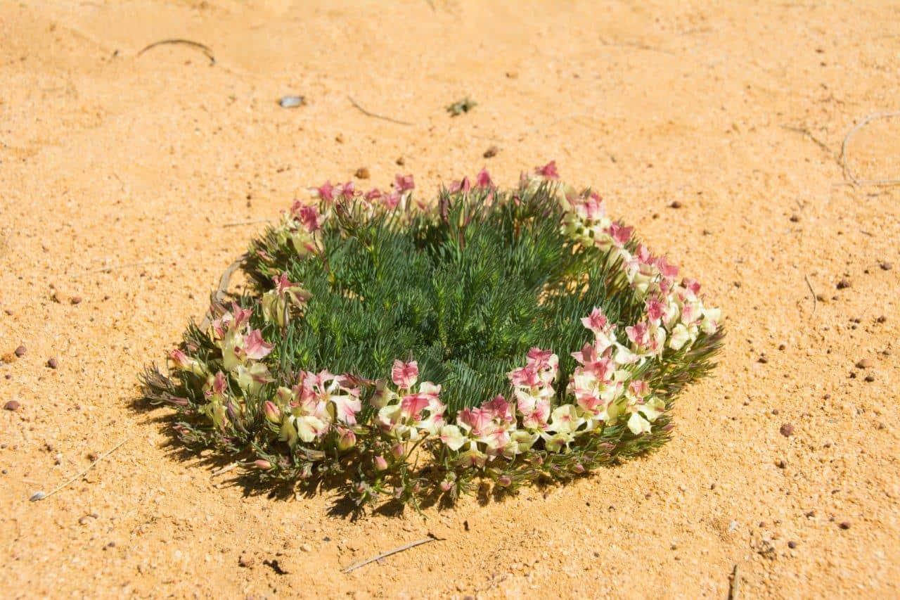Wreath flowers near Pindar