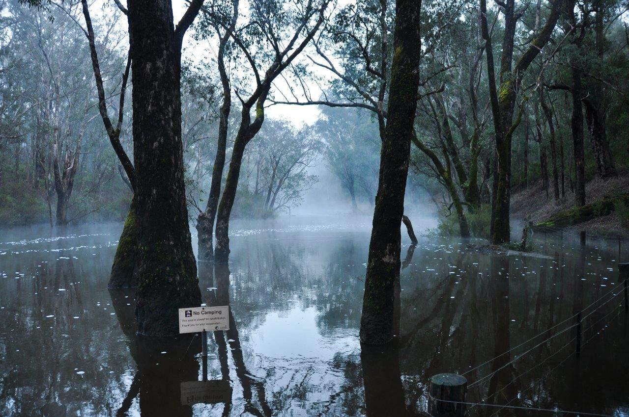 Lane Poole Reserve mist