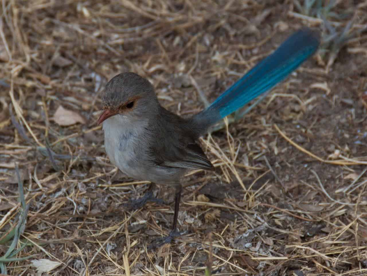 Olive Hill Farm birds