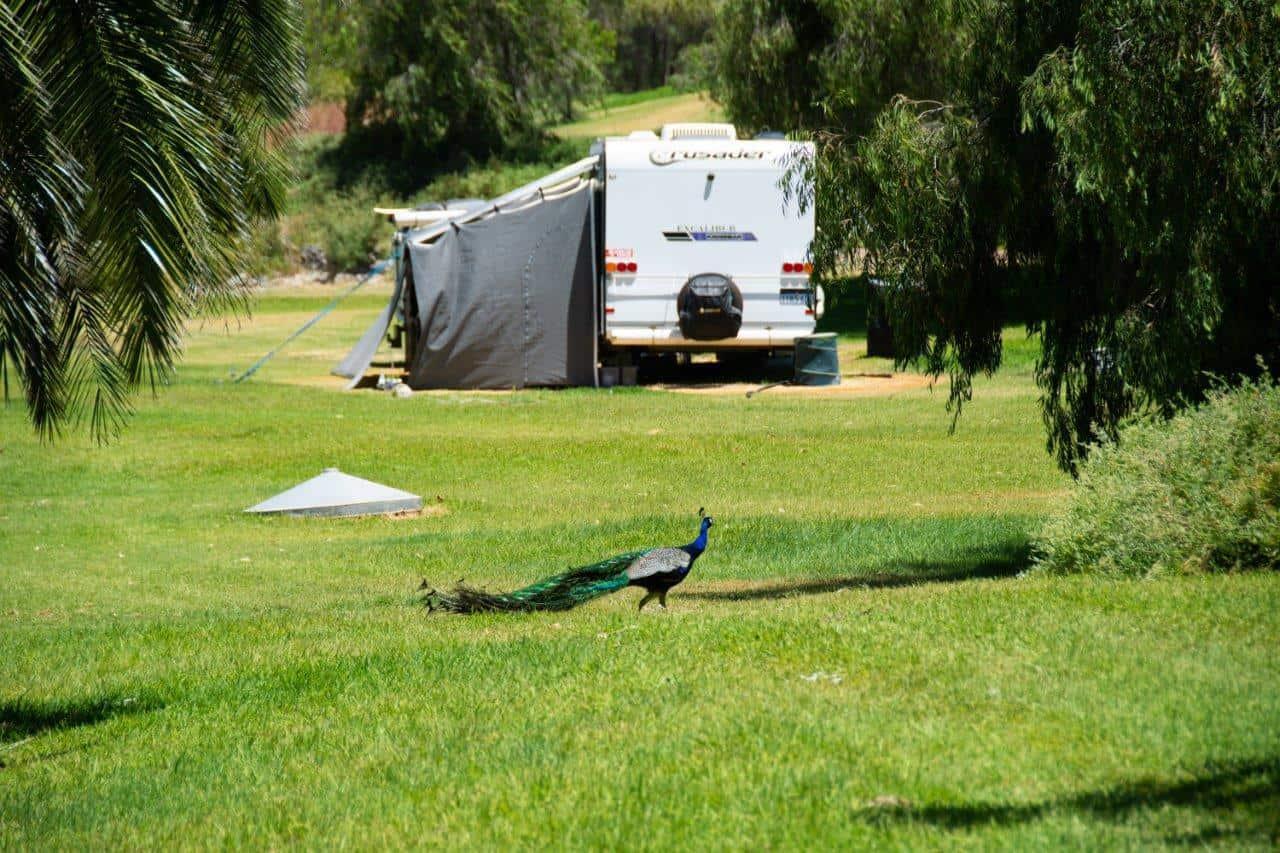Long term camping near Perth